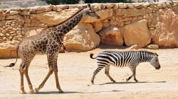 גן החיות התנכי